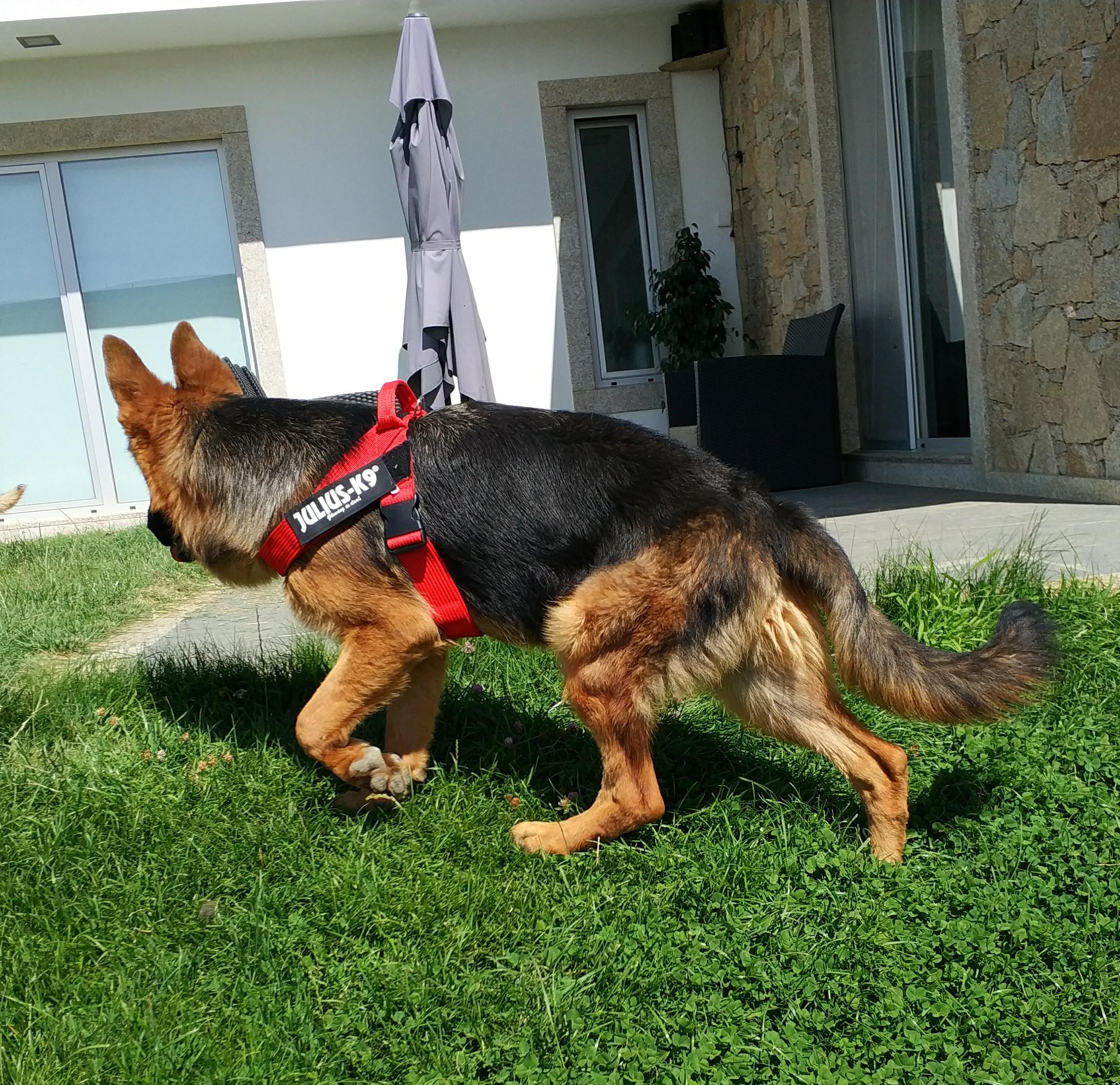 Arnês para cão 3