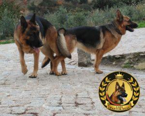 Os cães 3