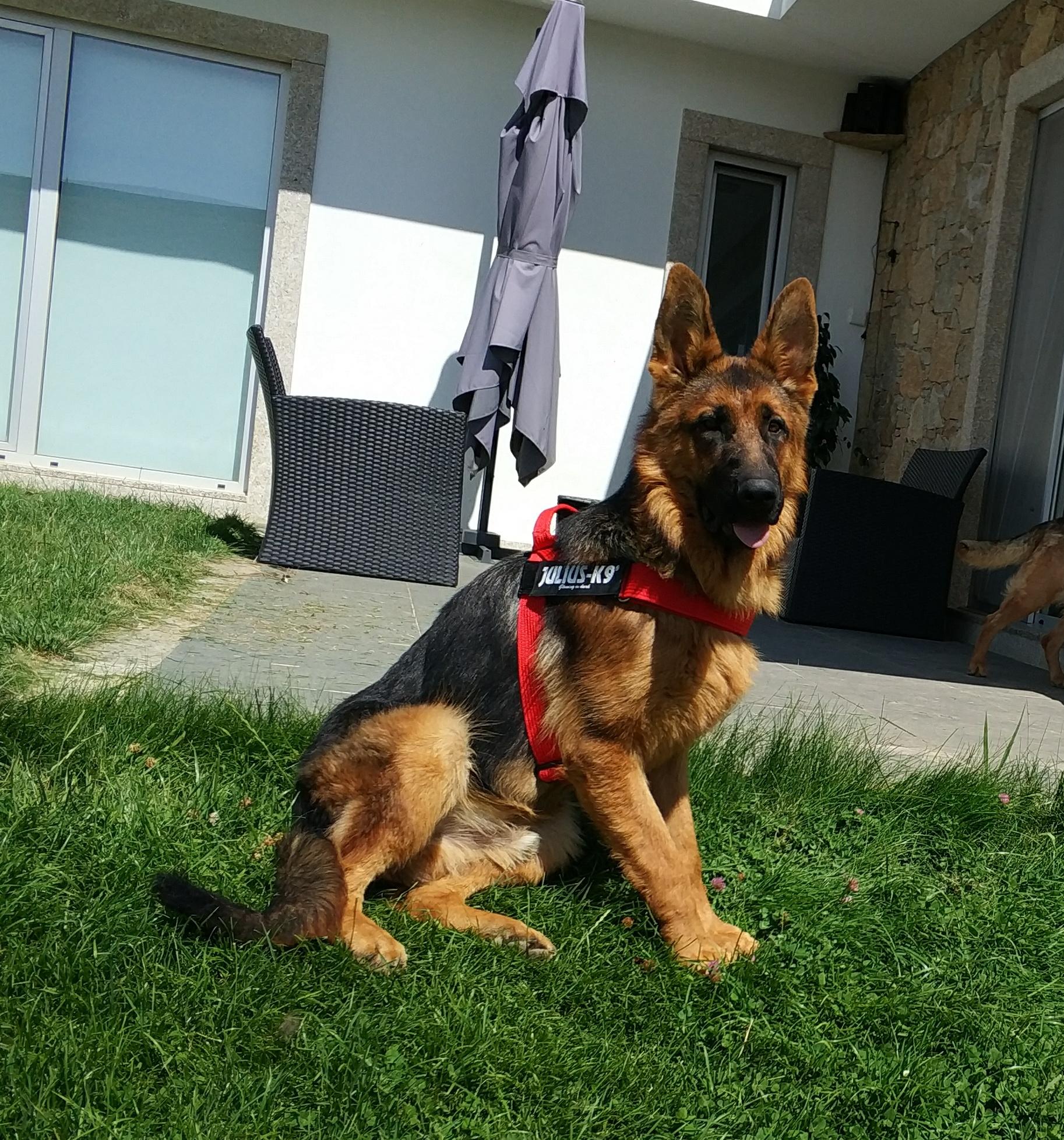 Arnês para cão 4